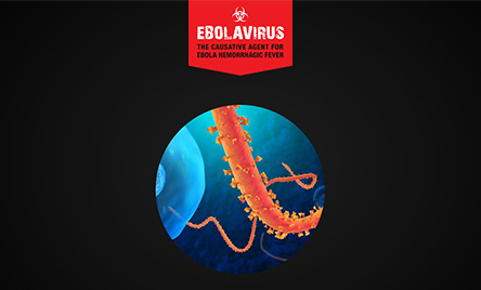 Ebolavirus: An Overview Presentationlear