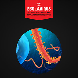 Ebolavirus: An Overview Presentation Thumbnail